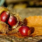 Castagne fresche: proprietà, come conservarle e usarle